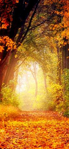 Maple Tree Walk
