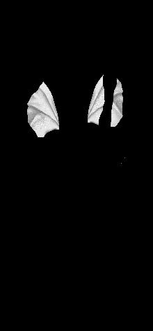 lilybeautifulwhtcp