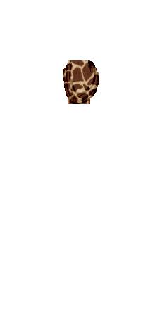 neckscrfgir