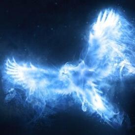 phoenixowl